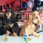 Bar le Ti'bar à Angers
