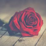 Rose rouge sur planches de bois